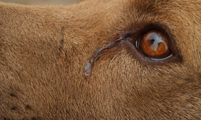 [cityname]: Dog 'Cries' Every Night While She Awaits Adoption, Shelter Shares Sad Photo As Last Hope
